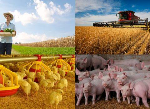 agricultura_agroindustria-compressed